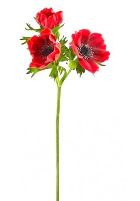 Fiore di Anemone Rosso Artificiale EDG - Linea Flowers