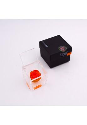 Rosa Arancio Piccola - Linea Flowercube