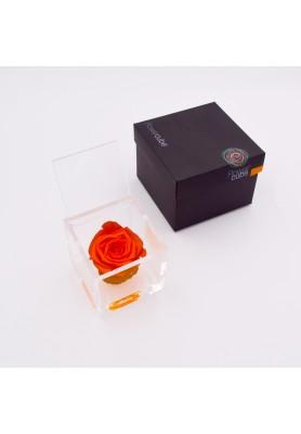Rosa Arancio Media - Linea Flowercube