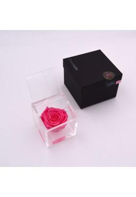 Rosa Rosa Media - Linea Flowercube