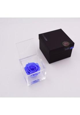 Rosa Azzurra Media - Linea Flowercube