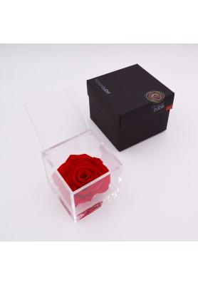 Rosa Rossa Gigante - Linea Flowercube